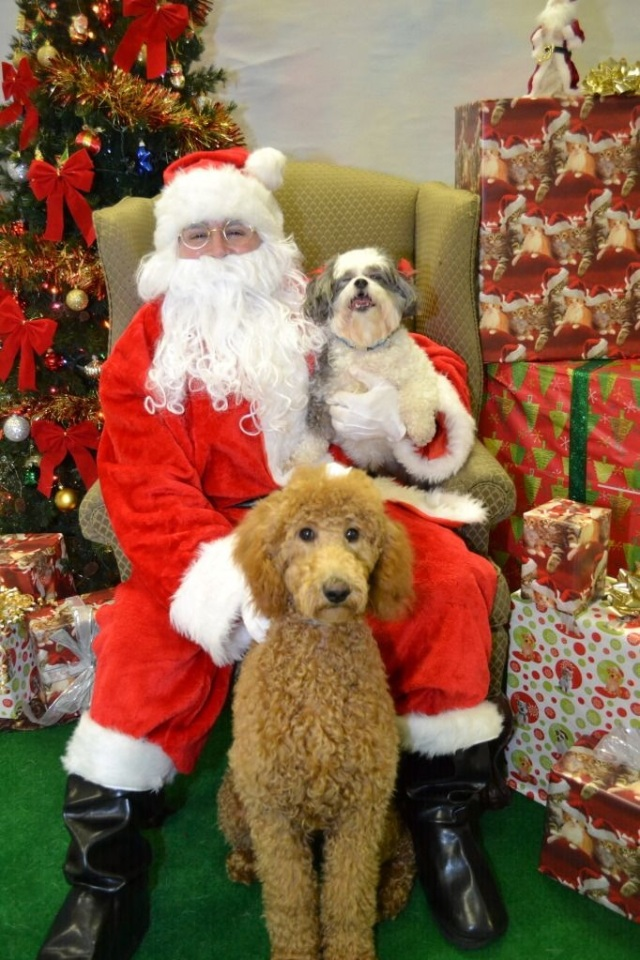 Mark's Sugar Dogs June & Apryl with Santa