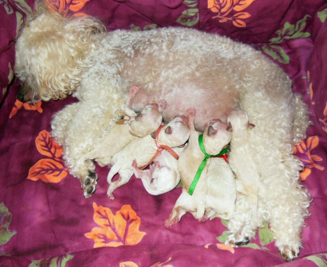 Lisa's new litter - 1 male & 5 females - 9-29-14