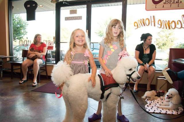 Popcorn at Copper Bell Cafe, an ADA Fund Raiser