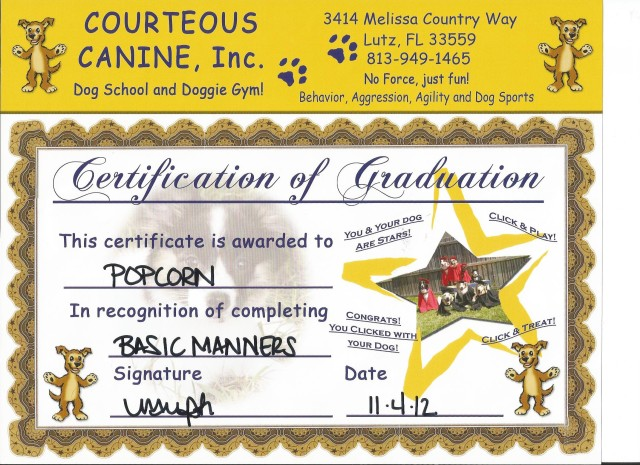 Popcorn's Basic Manners Certificate