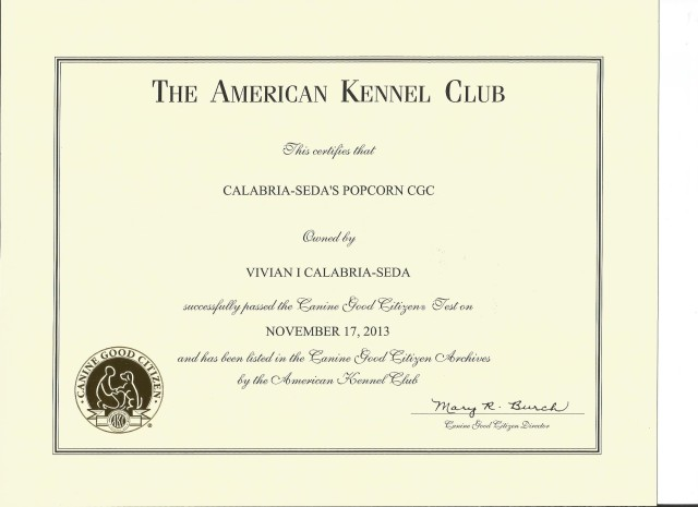 Popcorn's Canine Good Citizen (CGC) certificate