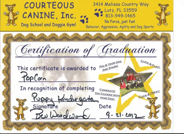 Popcorn's Puppy Kindergarden Certificate