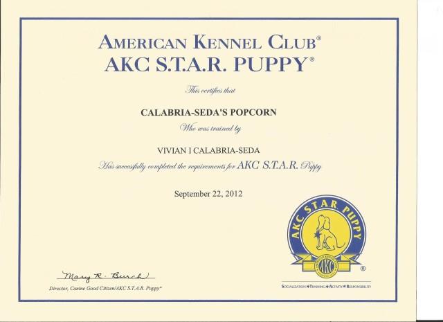 Popcorn's Star Puppy Certificate
