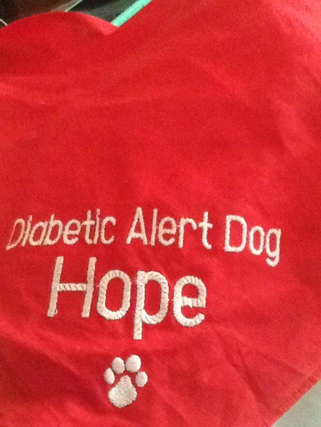 Mark's Sugar Dog Hope's terrific bandana